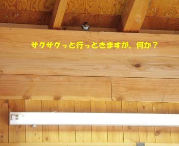 IMG_0522_convert_20120601153027.jpg